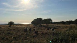 世界一エコな島?デンマークのSamsø(サムソー)島