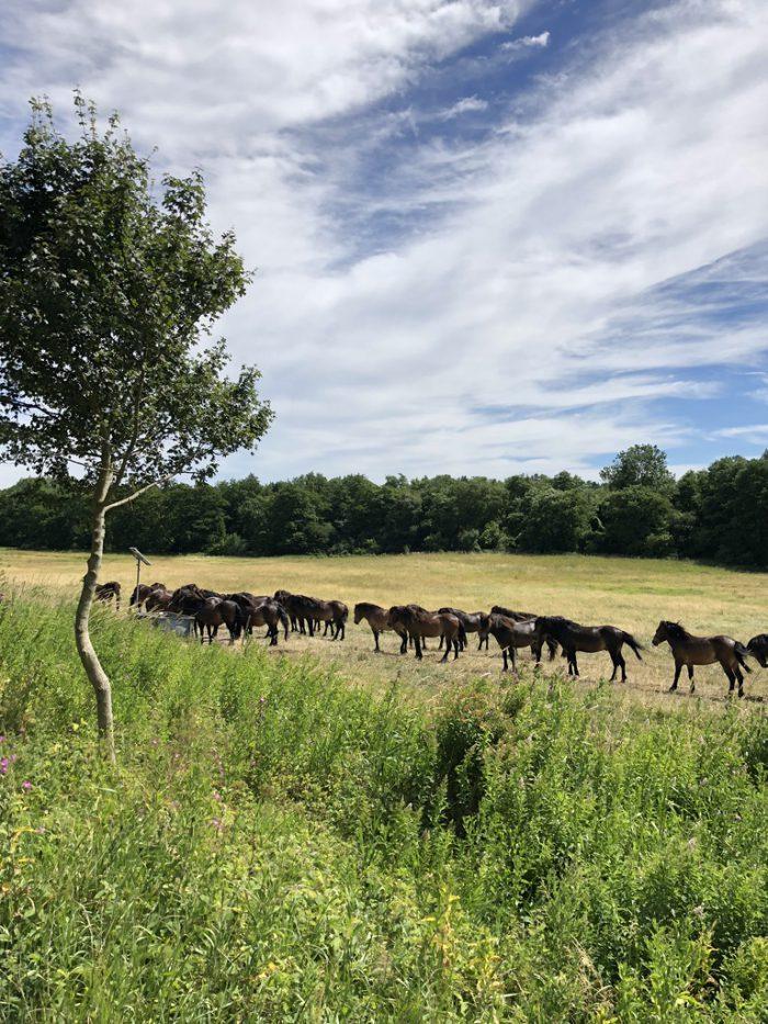 ワイルドな馬たち