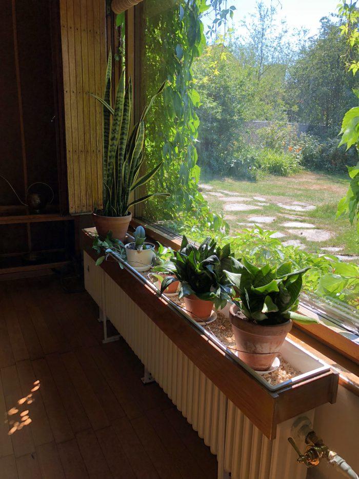 植物(アアルト自邸)