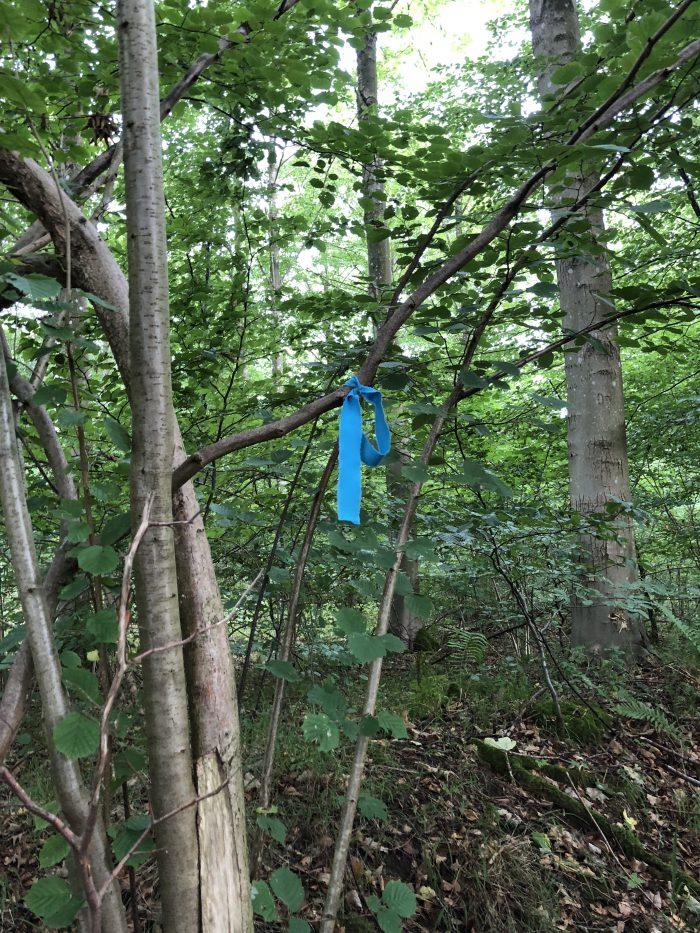 森の中の道標