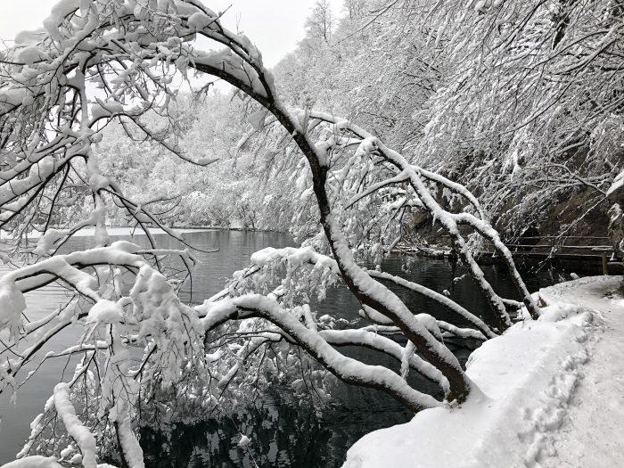 雪、ゆき、ユキ。