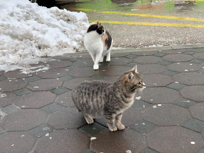 ザグレブからスプリトへ移動する時に発見した猫。可愛い。