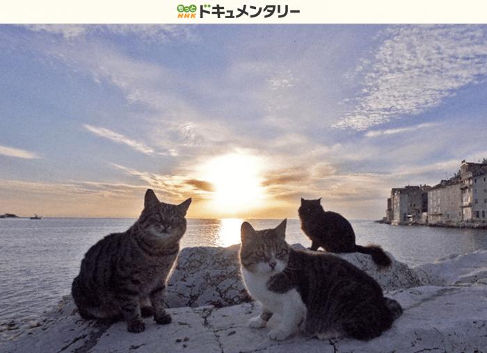 NHKドキュメンタリー - 岩合光昭の世界ネコ歩き「クロアチア」より