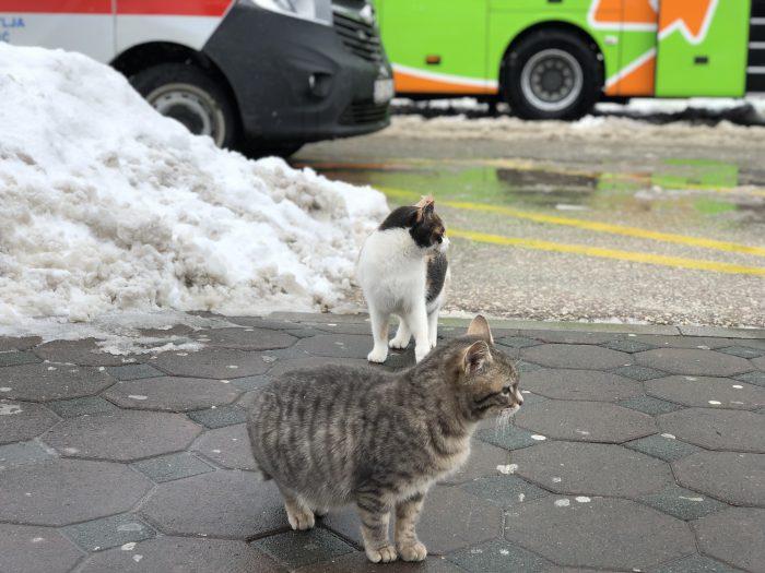 パーキングエリアで見かけた猫