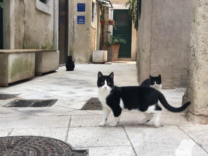 よく見たら奥に黒猫(スプリト)