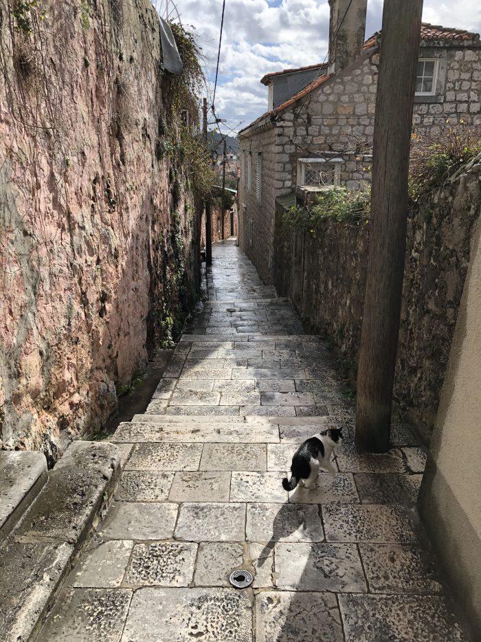 路地で先導してくれる猫