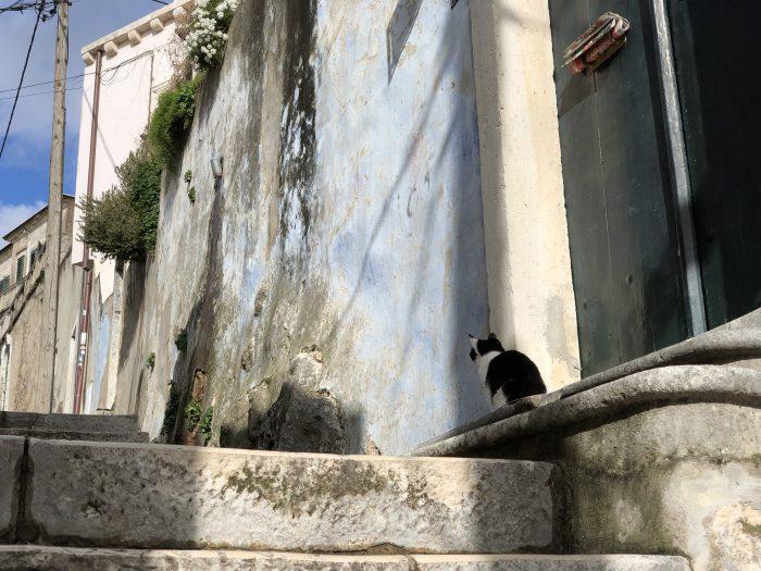 路地を見つめる猫(ドブロブニク)