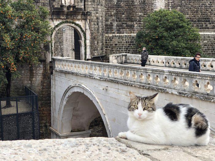 橋の前で寛ぐ猫(ドブロブニク )