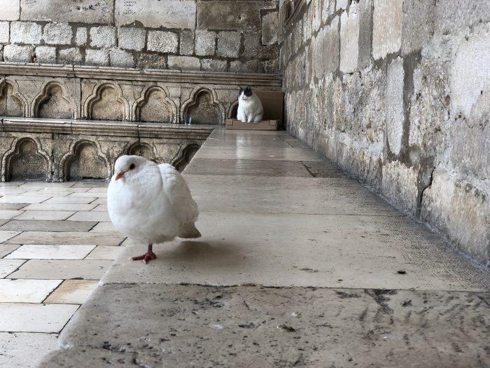 鳥の向こうに猫!(ドブロブニク)